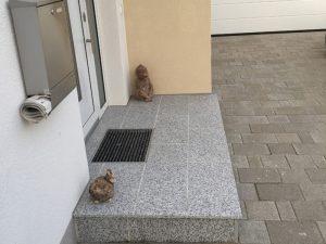 Pflasterverlag - gepflasterter Eingang bei Einfamilienhaus in Asten